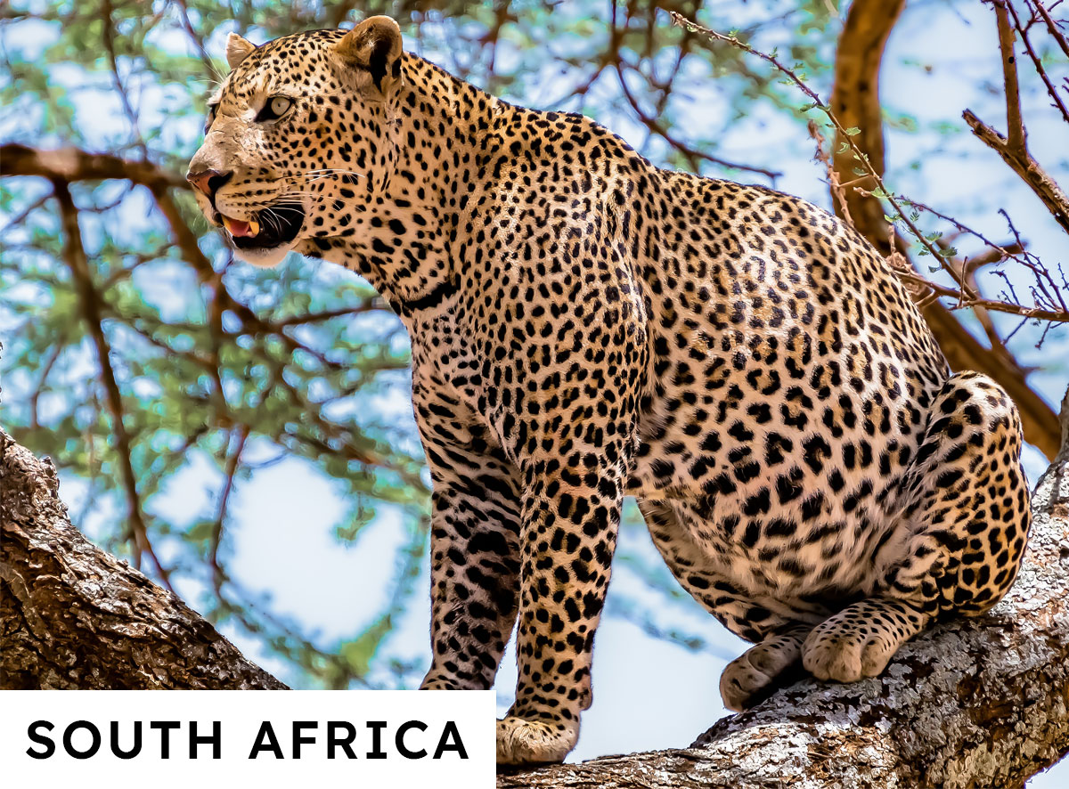 South Africa Bespoke Luxury Travel Packages
